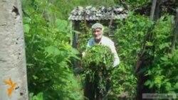 Թունավոր նյութերով այգիների գյուղմթերքը հասնում է Երեւան