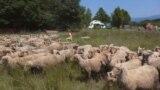 Grab - a Transylvanian man building his own farm.