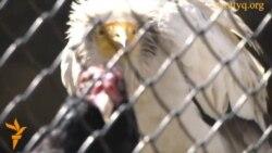 Новый сезон в зоопарке Алматы