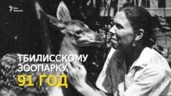 Тбилисскому зоопарку - 91