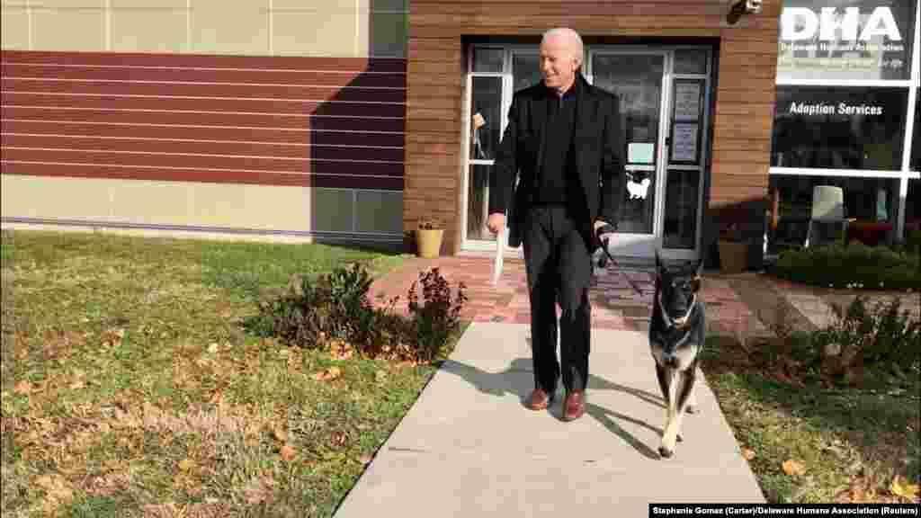 17 ноября 2018 года. Бывший вице-президент, 46-й президент Соединенных Штатов Джо Байден забирает из приюта Делаверской гуманной ассоциации собаку Мейджора