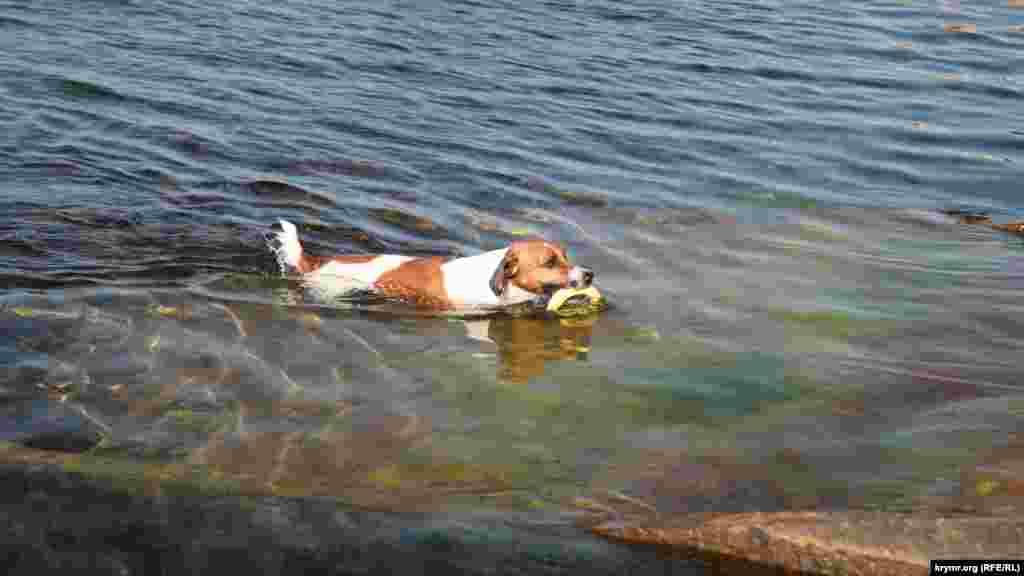 Прибой – излюбленное место не только для людей, но и для искушенных в плавании собак. Сюда нередко приводят четвероногих друзей, чтобы они вдоволь наплавались