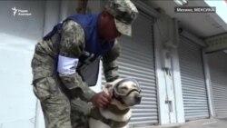 В Мексике проводили на пенсию знаменитую собаку-спасателя