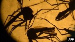 Virus «Aedes aegypti» növündən olan ağcaqanadlar tərəfindən yayılır.