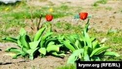 Найтепліше було 30 квітня, коли максимальна температура після полудня піднялася до 24,1 градуса
