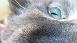 Кот, который гулял из Боснии до Швеции удостоен «Национального бестселлера».