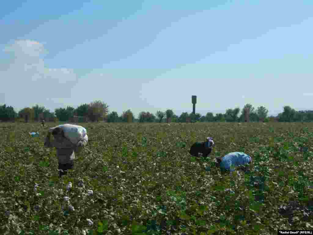Children carry cotton in Osh.