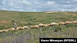 Արոտավայր Հայաստանում, արխիվ