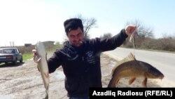 Salyan rayonun Qızılağac kənd sakini Nadir Həsənov yol qırağında balıq satır.