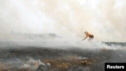 Торфяной пожар в Подмосковье. Август 2010 года.
