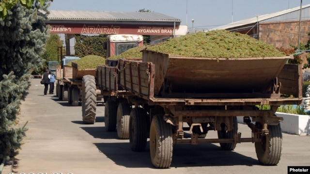 Armenia - Farmers deliver grapes to a brandy distillery in Ararat province, 9Sep2013.