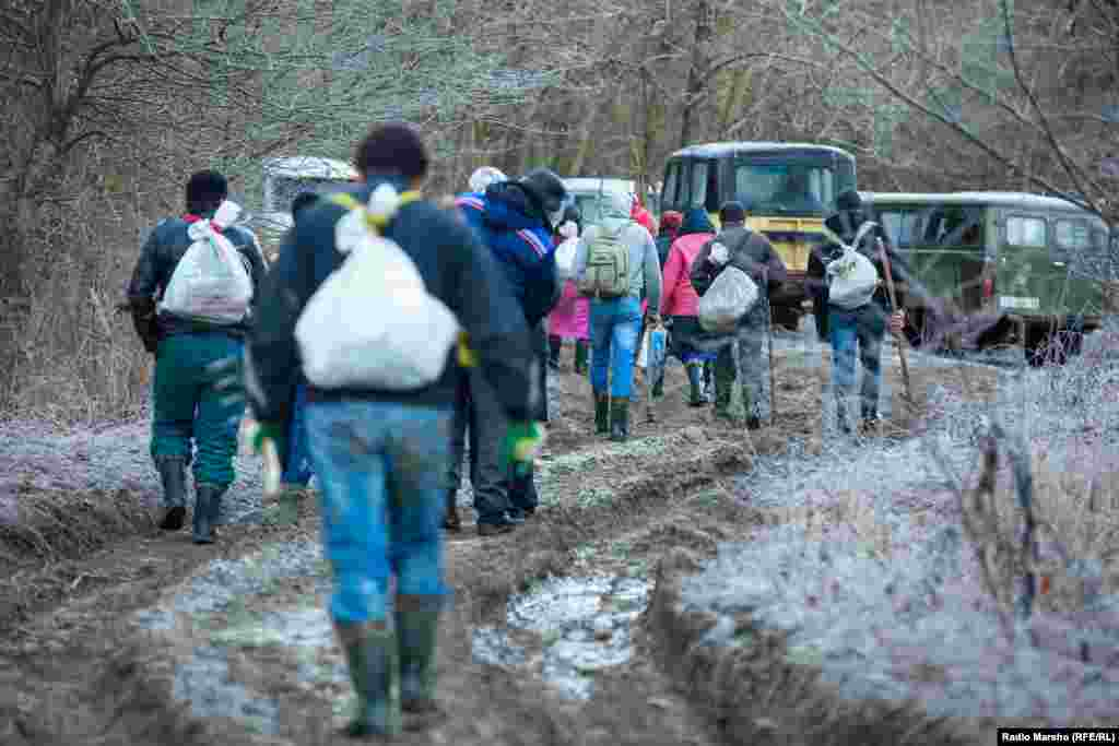 From the vans and trucks, the pickers head out with their sacks for the task at hand.