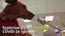ძაღლები COVID-19-ის წინააღმდეგ: ძაღლის ყნოსვა ექიმებს დიაგნოზის დასმაში დაეხმარება