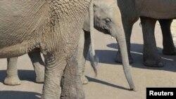 Elefantët në Afrikën Jugore