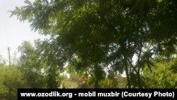 Узун туманидаги парк бузилмоқда