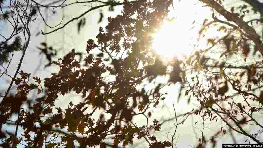 Сонце пробивається крізь туман і листя дерев