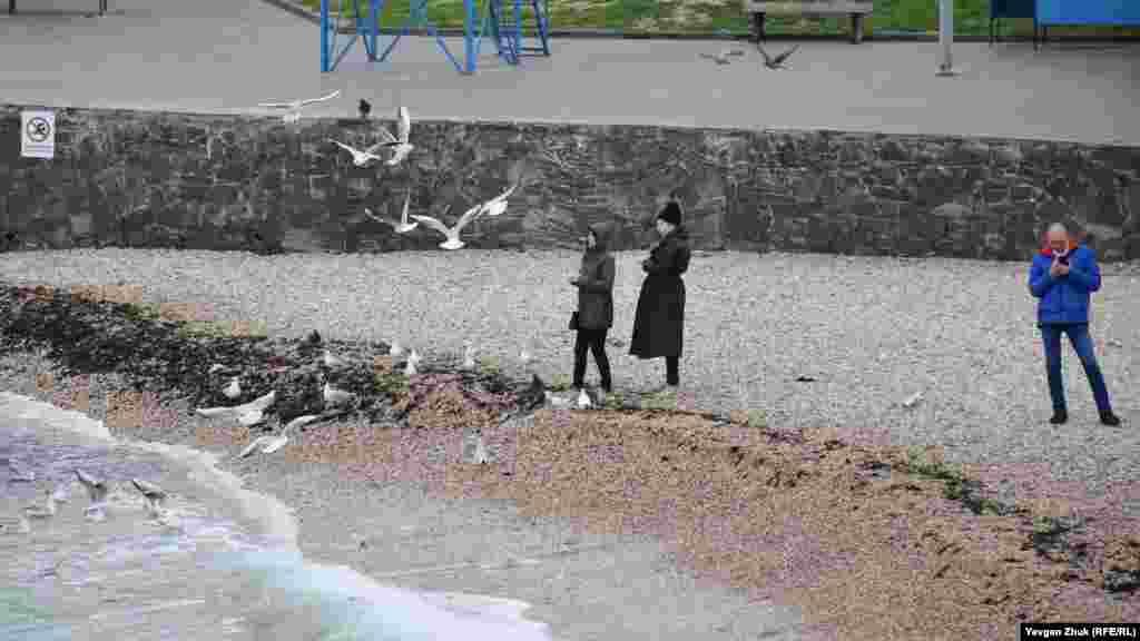 Біля прибою жінки годують чайок і голубів