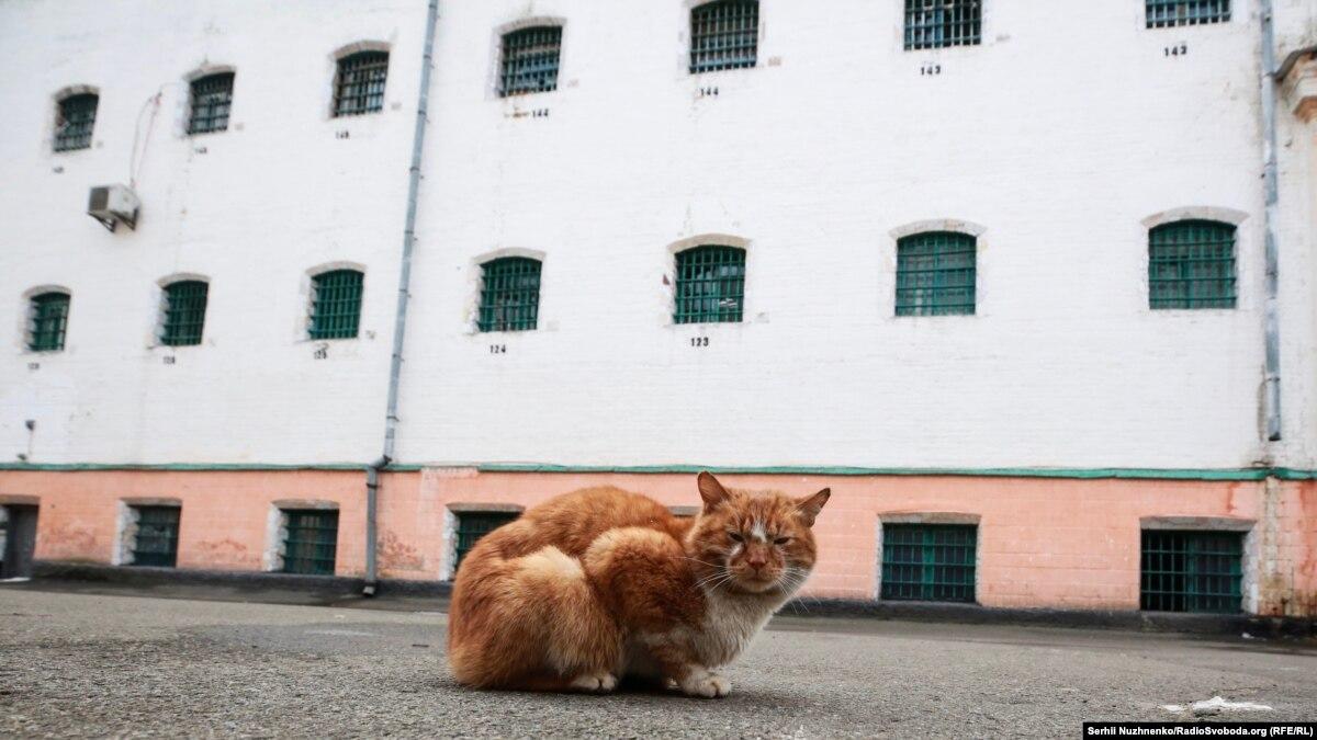 Голос из-за решетки: за кого проголосовали тюрьмы