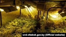 """Na dobru """"Jovanjica"""" pronađeno 600 kilograma marihuane spremne za prodaju"""