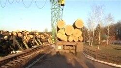 В лісгоспі на Кіровоградщині розікрали 1 мільйон бюджетних гривень