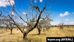 В широкой степи без днепровской воды: село Ботаническое на севере Крыма (фотогалерея)