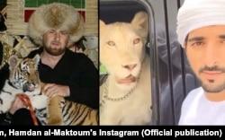И Кадыров, и шейх Хамдан демонстрируют в инстаграме прирученных диких кошек