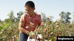 Ташкент облысындағы алқапта мақта жинап жүрген бала. Қыркүйек 2010 жыл.