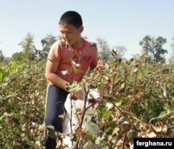Мақта терген бала. Өзбекстан, 2010 жылдың қыркүйегі.