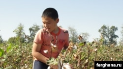 A boy picks cotton in Uzbekistan's Tashkent region during the 2010 harvest.