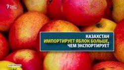 Казахстан – родина яблок, без своих яблок