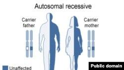 Мукополисахаридоз – редкое генетическое заболевание. Ребенок заболевает в одном случае из четырех, если оба родителя имеют дефектный ген