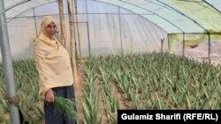 ایجاد فارم گیاه آلوئهورا در دایکندی توسط بانو جمیله سلطانی