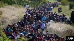 Мігранти йдуть через кордон із Хорватії до Угорщини, вересень 2015 року