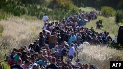 Migrantët në fshatin Zakany në Hungari afër kufirit me Kroacinë