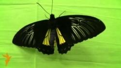 Тропические бабочки в Бишкеке
