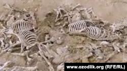 Кладбище ослов в Элликкалаинском районе Каракалпакстана.