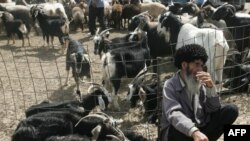 A Turkmen man waits to sell goats at a market near Ashgabat. Half of Turkmenistan's workforce is employed in the agriculture sector.