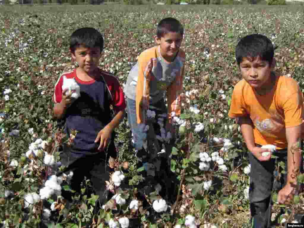 Өзбекстанда мақта алқабындағы жұмысшы балалар.