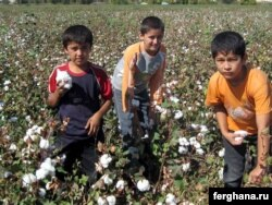 Школьники привлеченные к работе на хлопковых полях. Узбекистан, 3 октября 2009 года.