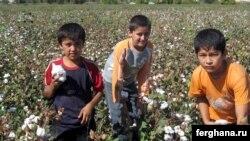 Өзбекстанның мақта алқабындағы балалар еңбегі. 3 қазан 2009