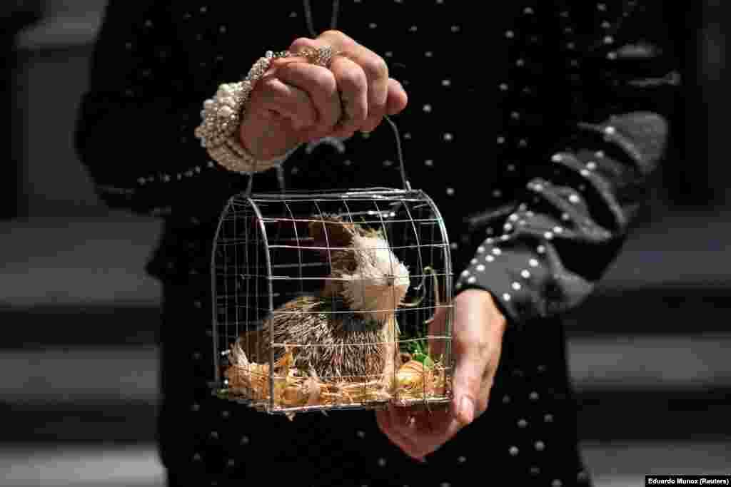 A maszkviselés alól az állatoknak felmentés jár, főleg, ha nem is igaziak.