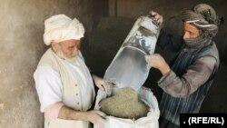 فروشندههای گیاههای طبی در ولایت هرات