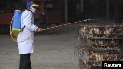 Свійську птицю дезінфікують і в інших регіонах Китаю, місто Хефей, 5 квітня 2013 року