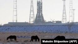Лошади на фоне установленной на стартовой площадке Байконура ракеты-носителя «Союз МС-07» для доставки космонавтов на МКС.