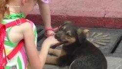 В Керчи избавятся от бродячих собак радикальным способом (видео)