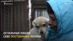 Волонтеры в Томске сдают беспризорных собак в аренду