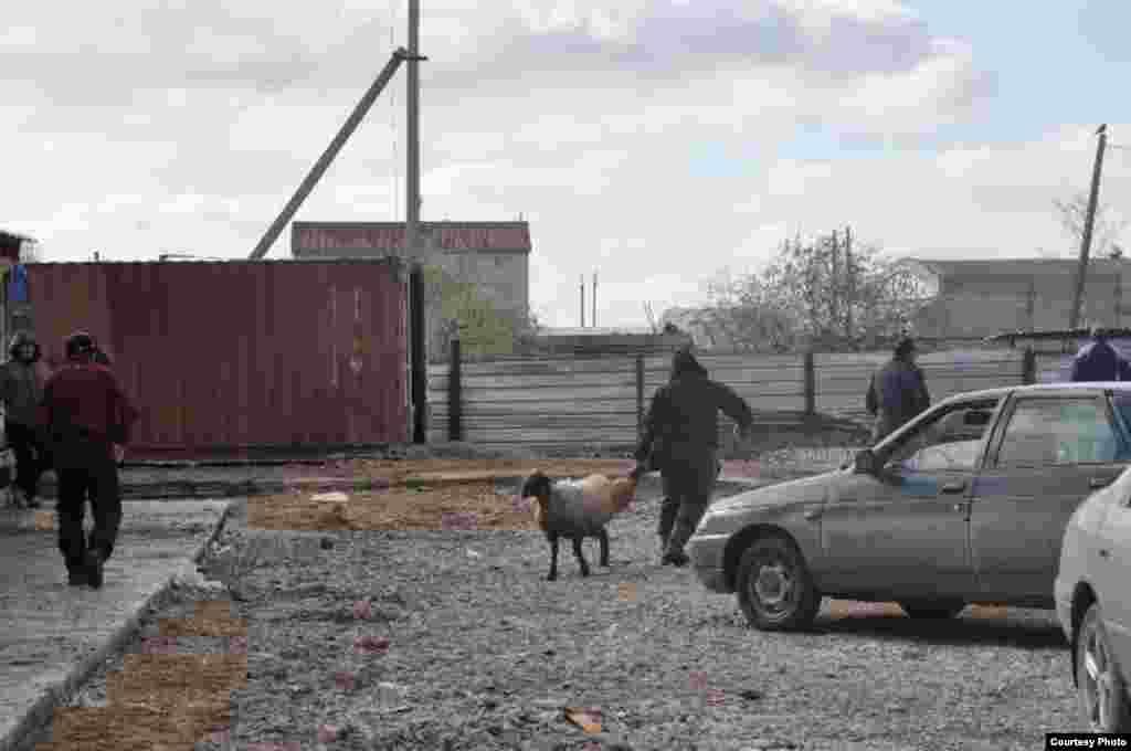Продавцы на этом скотном рынке утверждают, что цены на жертвенных животных нисколько не растут, потому что резко растет и предложение. Однако покупатели говорят, что цены растут из года в год.