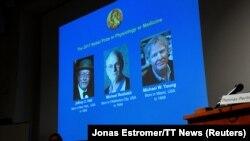 Медицина жаатындагы Нобел сыйлыгынын быйылкы жеңүүчүлөрү Жеффри Холл, Майкл Росбаш жана Майкл Янг
