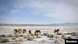 Алмати, Ашхобод ва Тошкент чегаралари туташадиган нуқтани аниқлаш арафасида