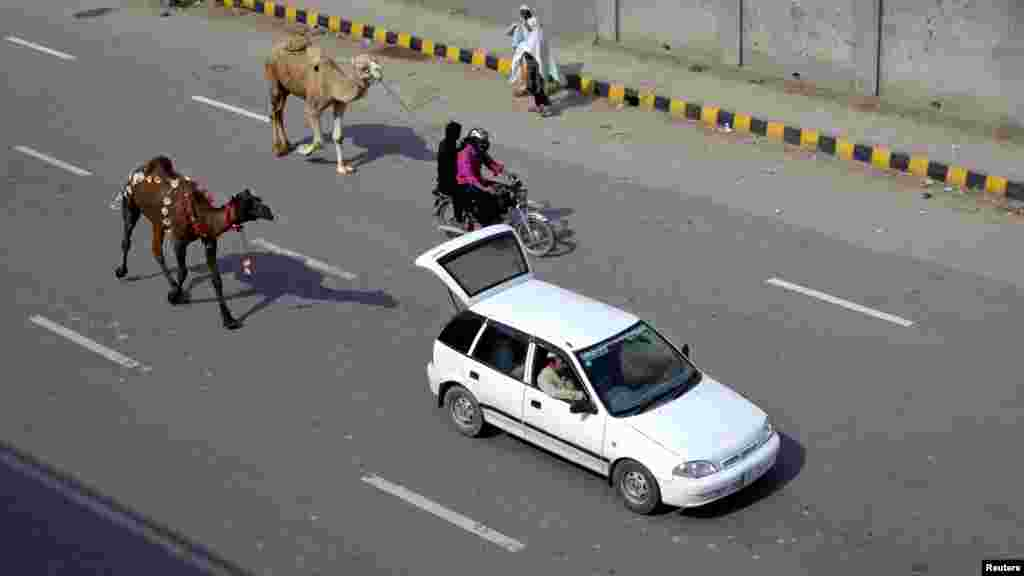 OCTOBER 26, 2012 -- Men lead recently purchased camels by car and motorcycle ahead of Eid al-Adha celebrations in Lahore, Pakistan. (Reuters/Mohsin Raza)
